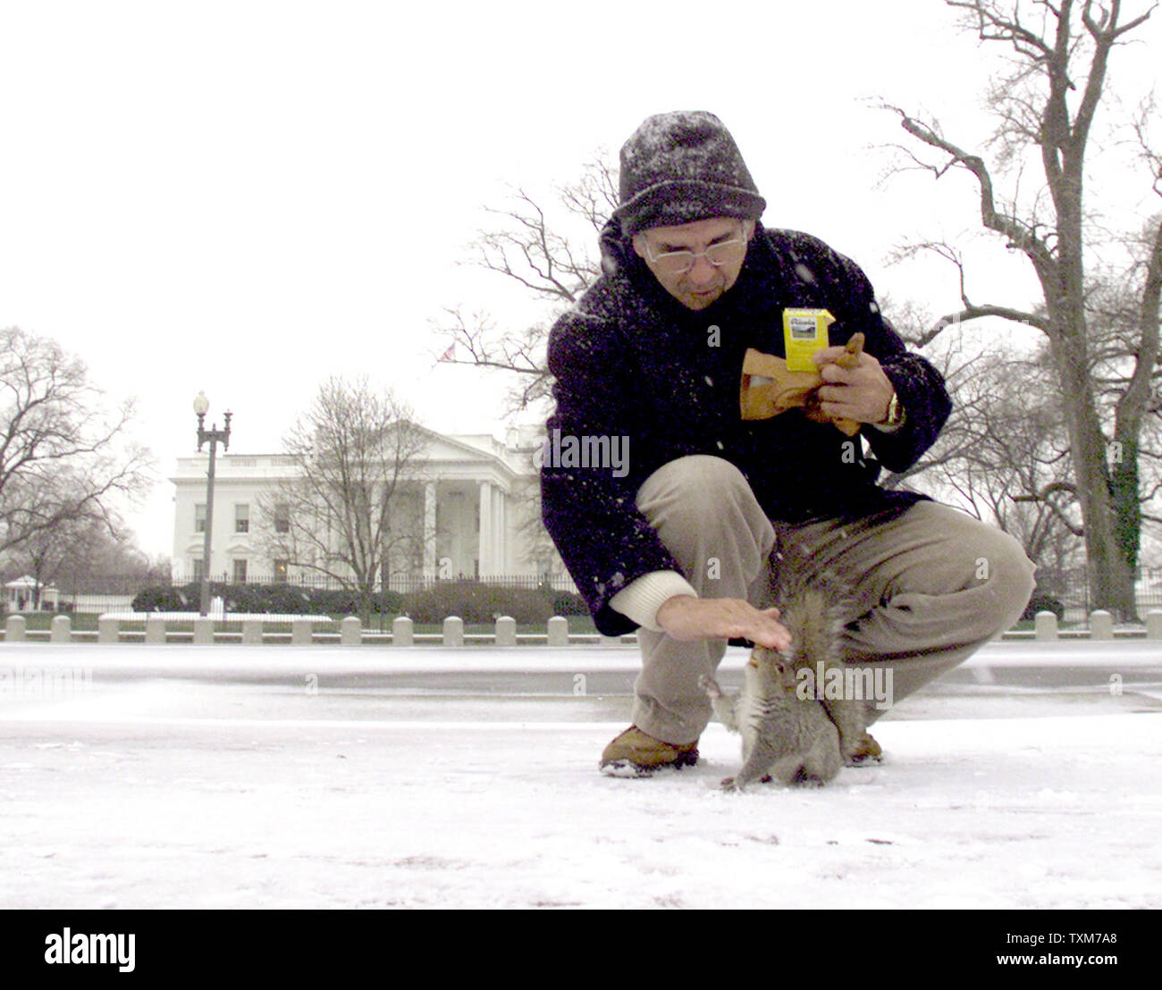 WAP2000011801 - 18 JANUARY 2000 - WASHINGTON, DC, USA: A tourist stoops to pet a squirrel in Lafayette Park in front of the White House, January 18. The Washington area received its first snow fall of the season.  jr/jr/Terry Schmitt - Stock Image