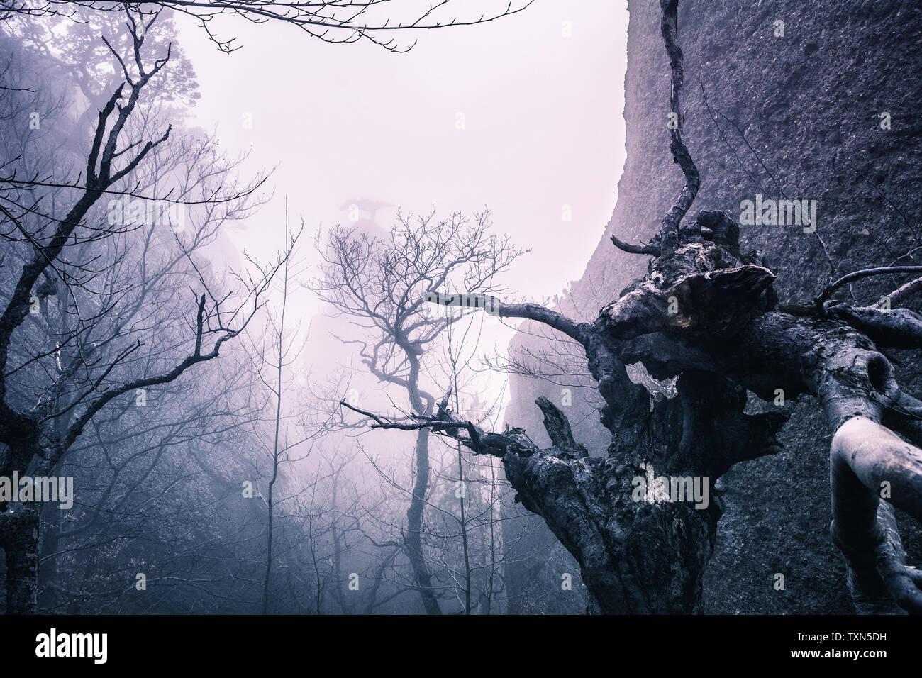 Misty forest in the Demerdzhi mountain range in the Valley of ghosts Crimea Мистический вид на дерево и скалы в тумане в Долине привидений на Демерджи - Stock Image