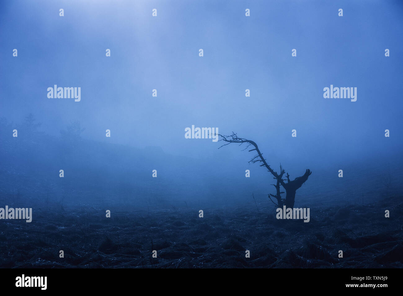A lonely tree in the fog stands in the field. Misty forest in the Demerdzhi mountain range in the Valley of ghosts. Crimea Одинокое дерево в тумане - Stock Image