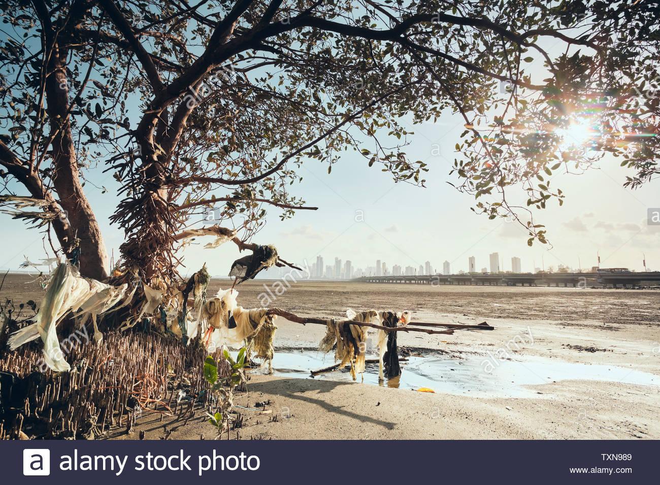 Plastic pollution on seashore, Costa del Este, Ciudad de Panamá, Panama - Stock Image