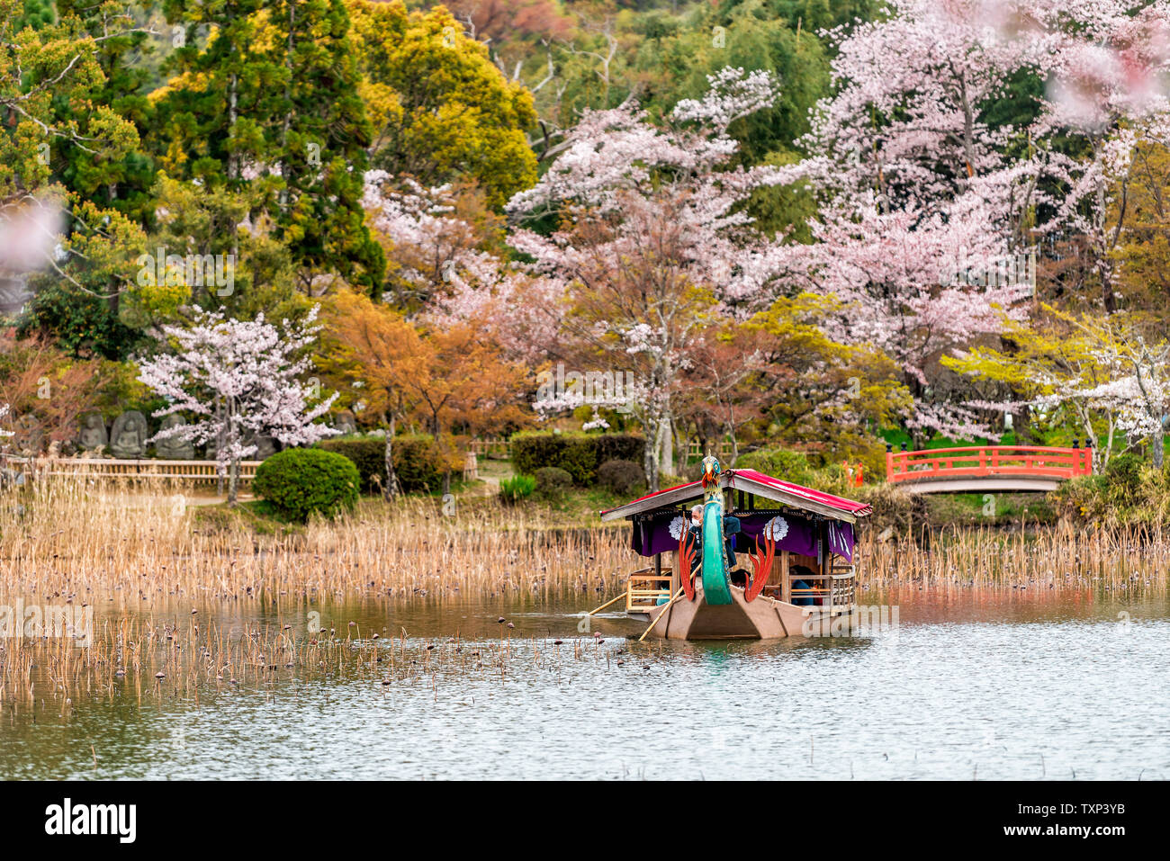 Kyoto, Japan - April 11, 2019: Cherry blossom by Osawa-no-Ike Pond lake in spring in Arashiyama area by Daikakuji Temple with red traditional tour boa Stock Photo