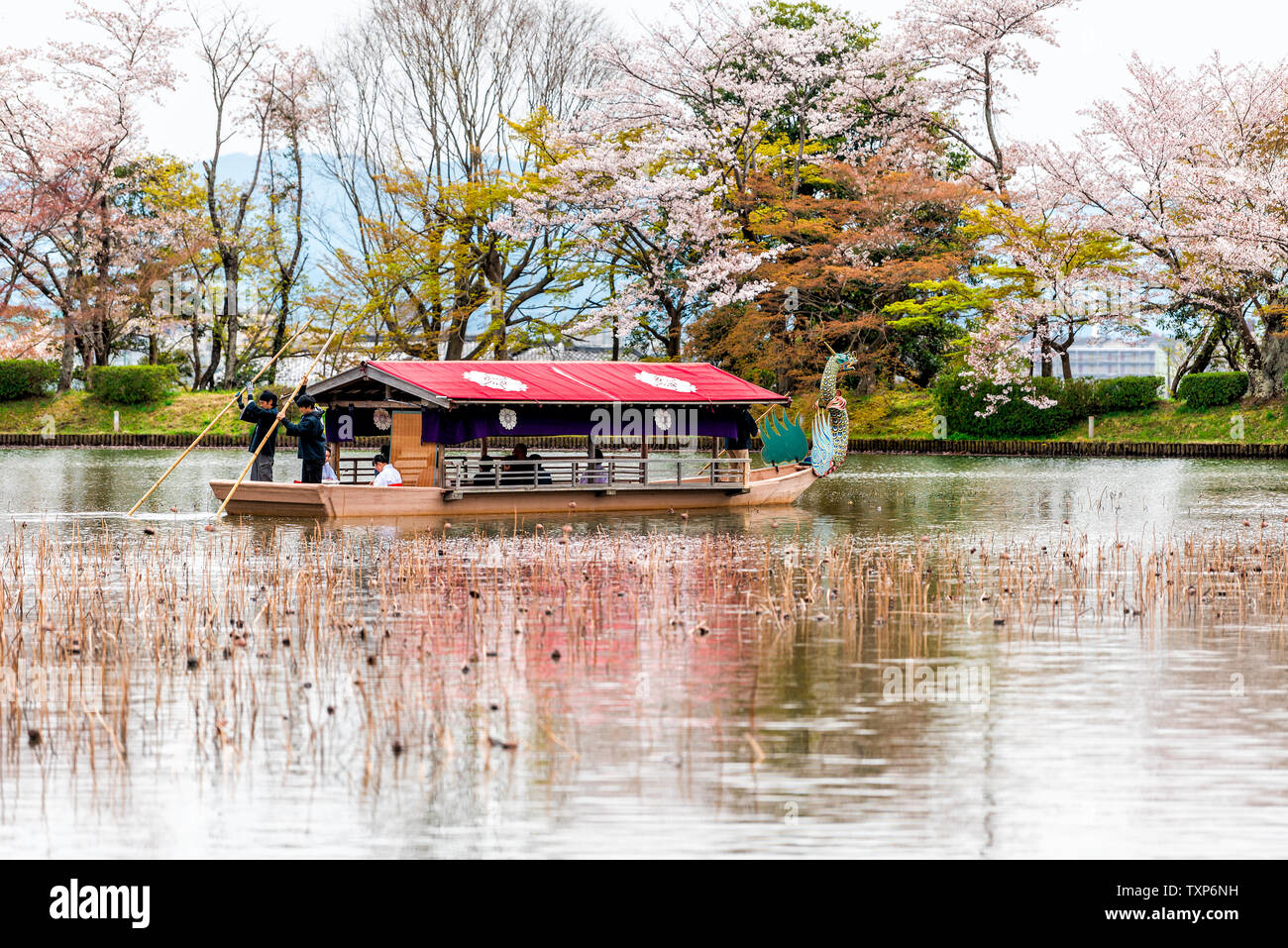 Kyoto, Japan - April 11, 2019: Cherry blossom and lotus pond by Osawa-no-Ike Pond lake in spring in Arashiyama area by Daikakuji Temple with red drago Stock Photo