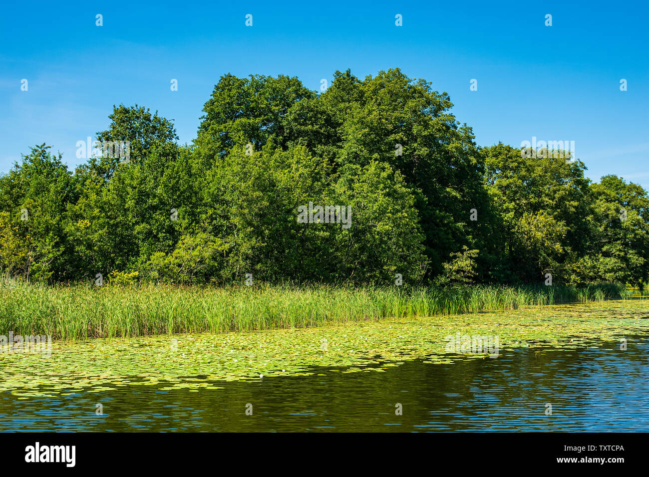 Landscape on a lake in Templin, Germany. - Stock Image