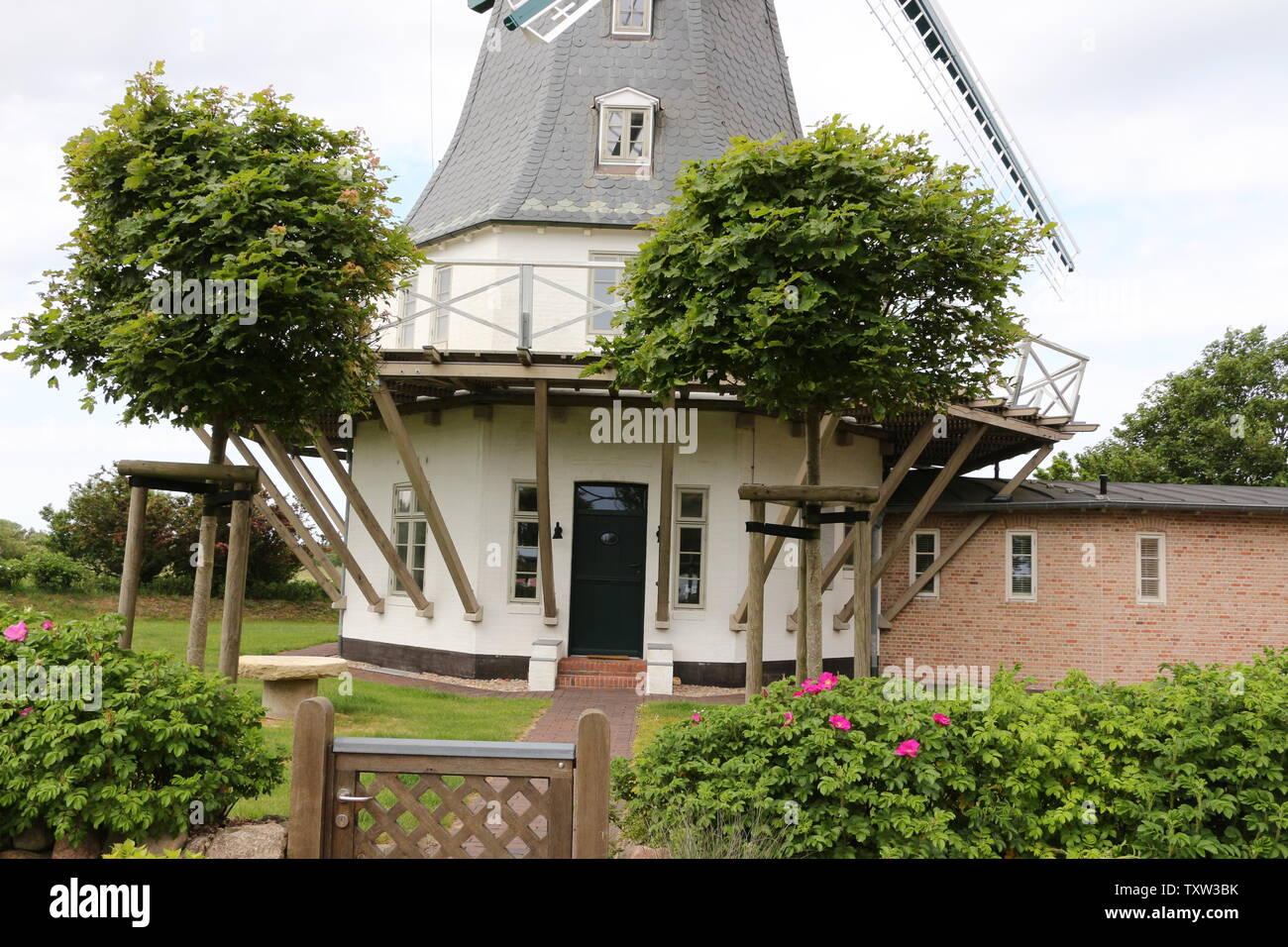Historische Windmühle auf der Nordseeinsel Föhr Stock Photo