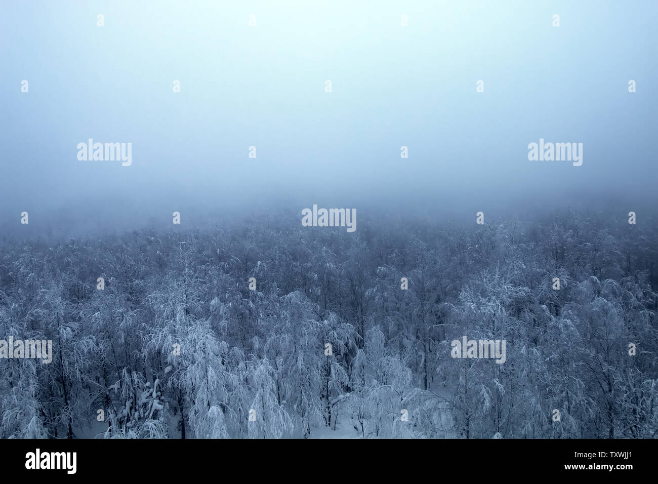 Beautiful icy forest (top view) and misty winter sun. Winter landscape from the far North - Stock Image