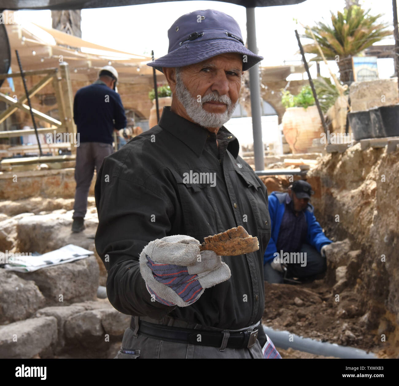 An Israel Antiquities worker shows the teeth of an animal that he found while excavating a section of 'Roma and Augusta Temple' in Caesarea, Israel, April 26, 2017. The Temple was constructed in the first century by King Herod in honor of Augustus Caesar. The Edmond de Rothschild Foundations is investing approximately $275,000 to expose and restore Caesarea's hidden treasures.  Photo by Debbie Hill/UPI - Stock Image