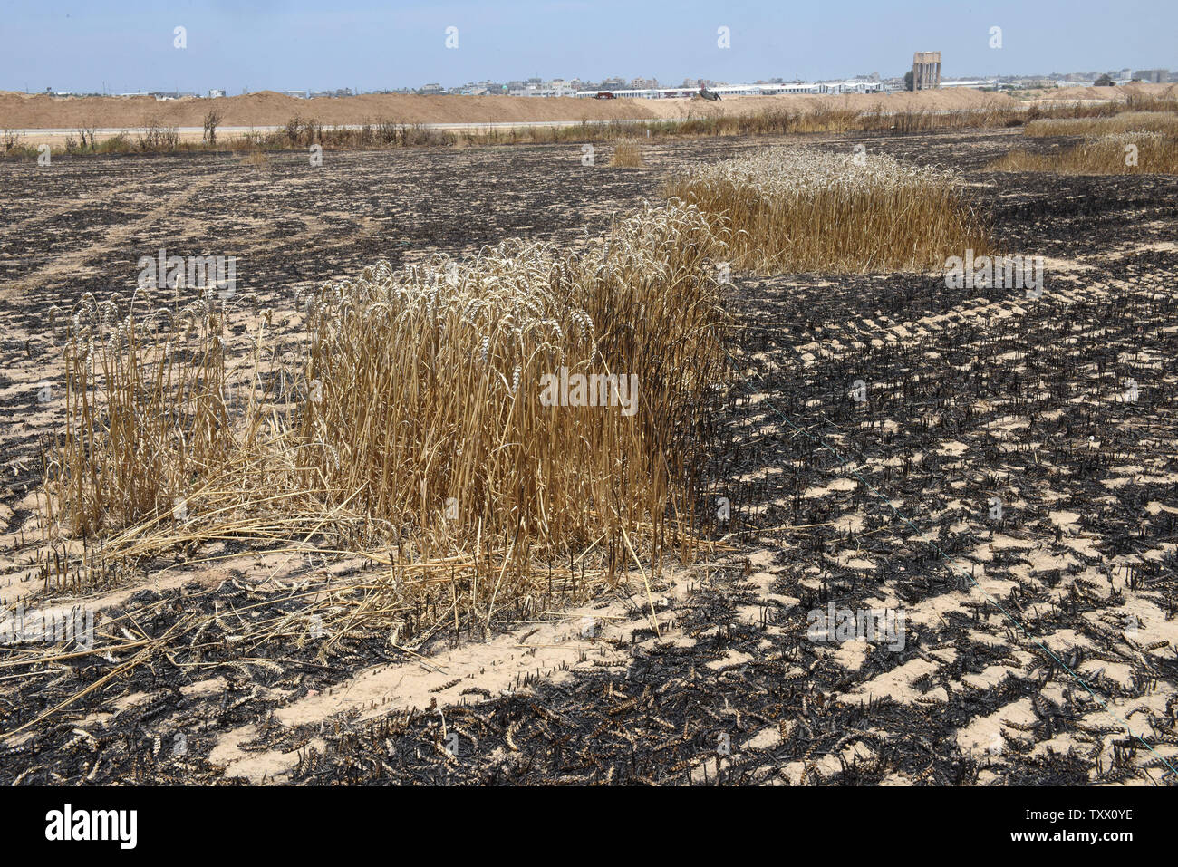 Wheat fields in Kibbutz Nahal Oz, along the the Israeli- Gaza border, are burned from fires started by kites sent by Palestinian protesters in Gaza, June 5, 2018. Over 600 kites have been flown into Israel from the Gaza Strip, destroying 9000 square meters of crops and forests.    Photo by Debbie Hill/UPI - Stock Image