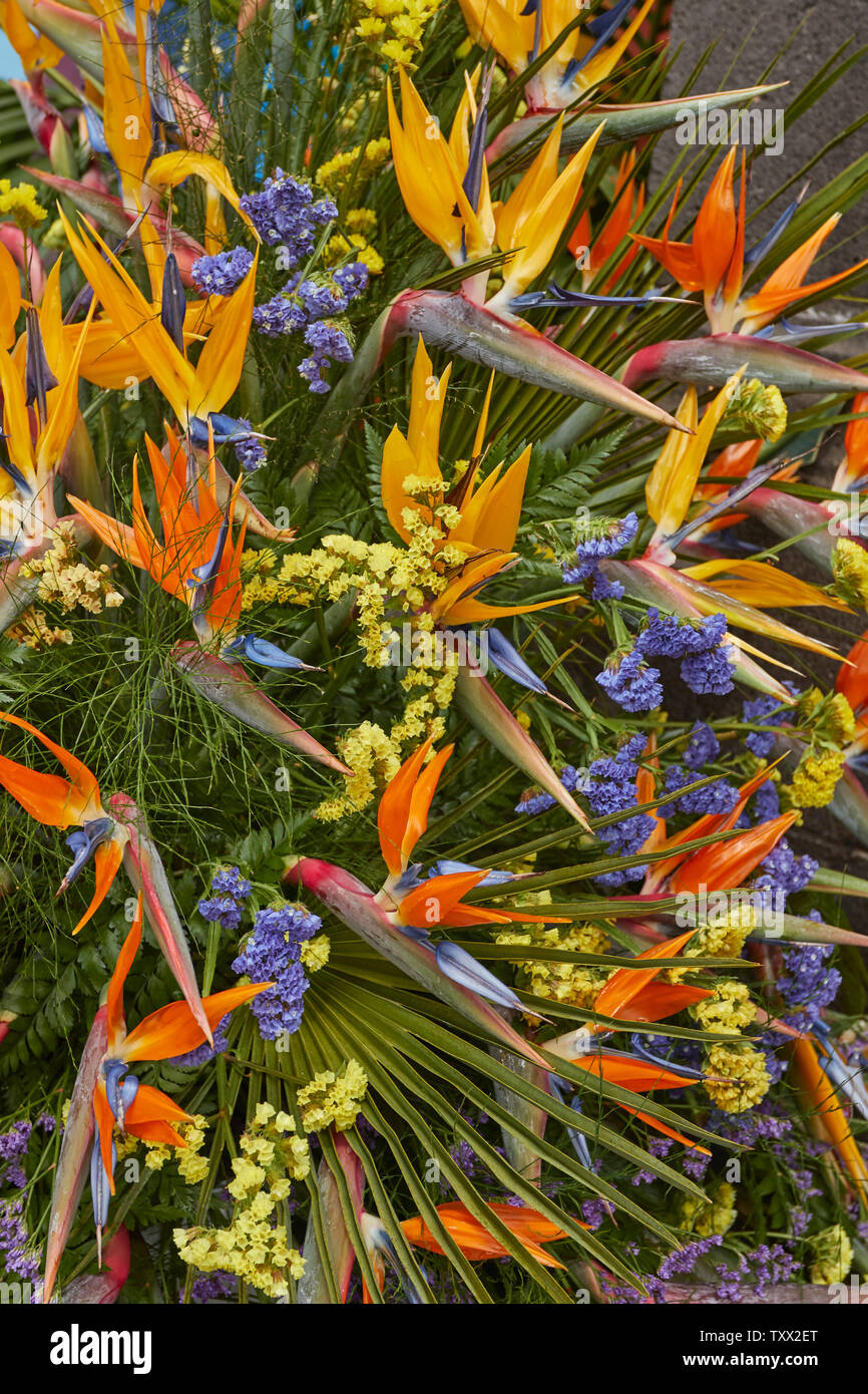 Strelitzias, bird of paradise flower, in a bouquet for the Corpus Christy celebrations, June 2019, Funchal, Madeira, Portugal, European Union Stock Photo