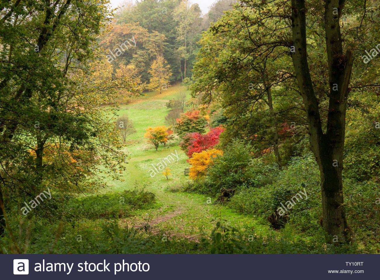 Winkworth Arboretum in Godalming, Surrey, In Autumn, UK - Stock Image