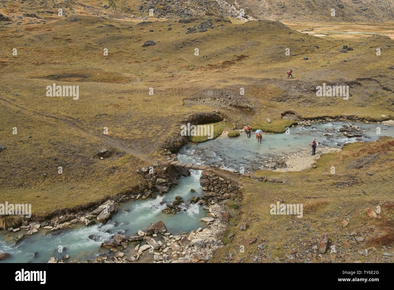 Horses crossing the Chacolpaya River, Cordillera Real Traverse, Bolivia Stock Photo