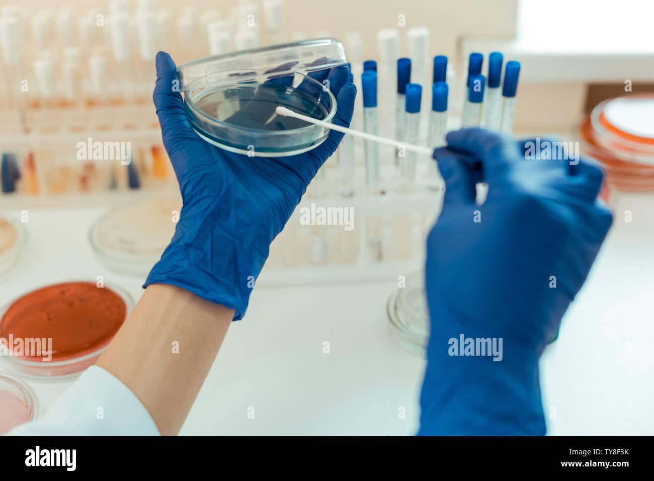 Close up of a petri dish in scientists hands - Stock Image