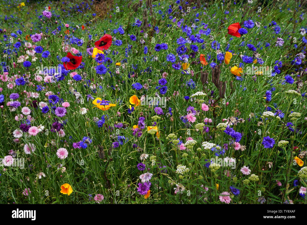 close up of colorful wildflowers in the country - Stock Image