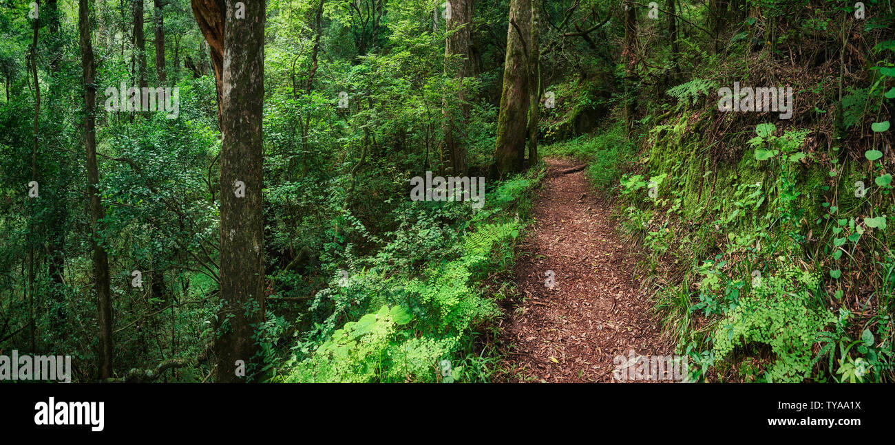 A treelined pathway winding thorough the Tugela River Valley. Afternoon. Full colour image. Rainbow Gorge, Drakensberg, Kwazulu-Natal, South Africa Stock Photo