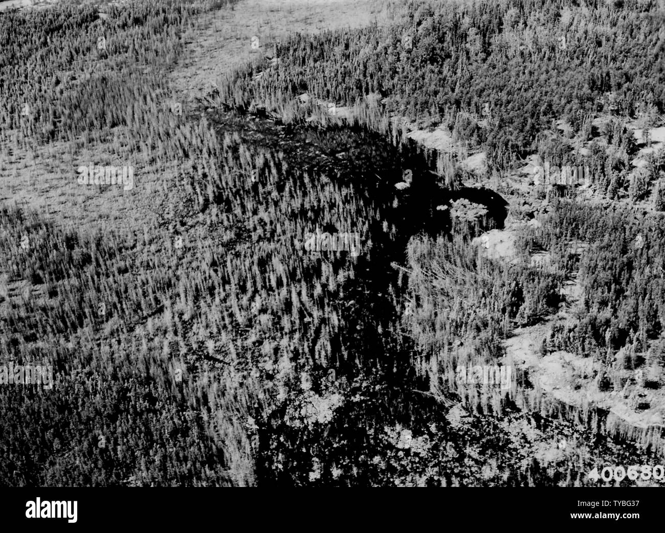 Photograph of Beaver Pond; Scope and content:  Original caption: Beaver pond, showing flooded spruce swamp. Note beaver house in open water (center). View taken in head-water stream of the Stuart River 1 1/2 miles northeast of Portage River CCC Camp. (LaCroix Ranger Dist.). Stock Photo