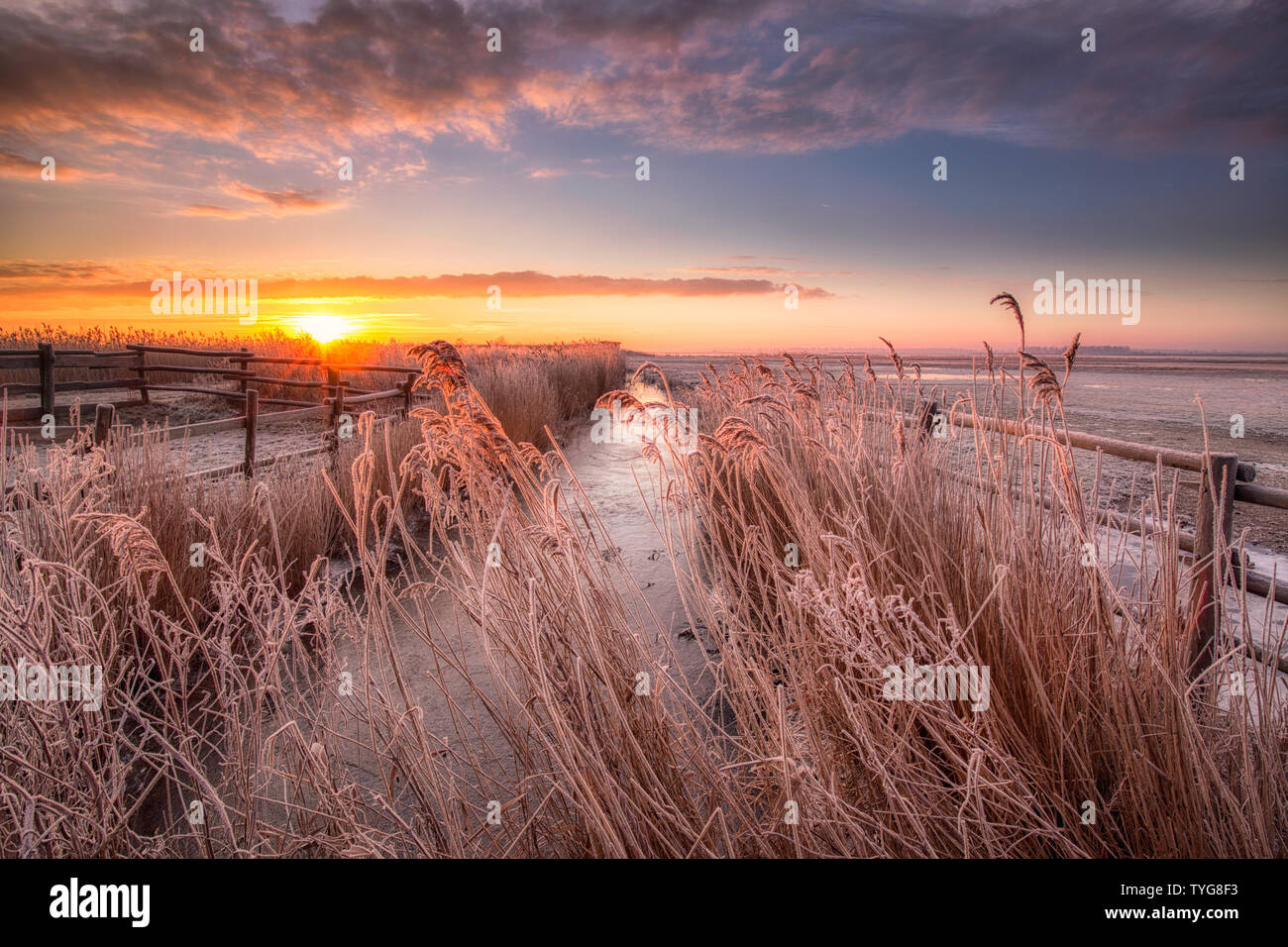 A winter landscape in the Netherlands with a beautiful sunrise with bright colours in the sky and frost on the fields at Lauwersmeer National Park Stock Photo