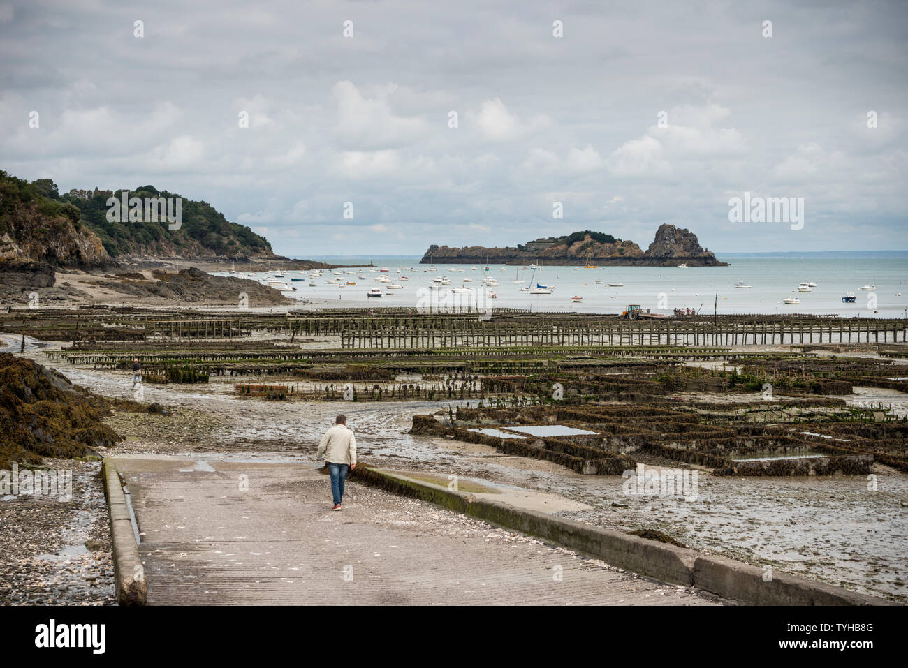 Oyster beds revealed by low tide on the beach of Cancale, Brittany, France Stock Photo