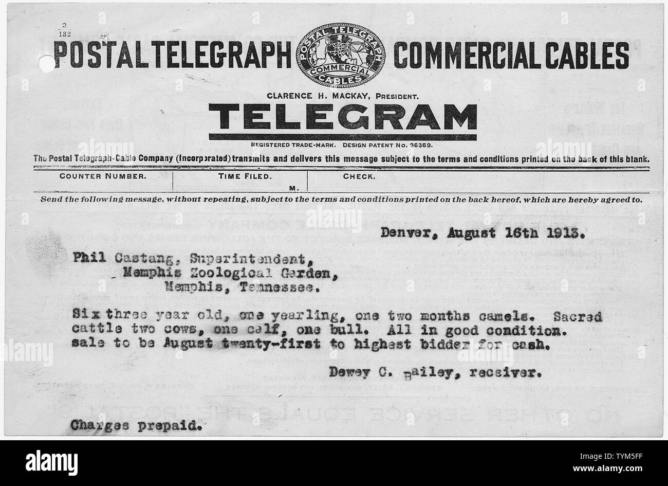 Telegram To Memphis Zoological Garden Announcing Sale Of Livestock From Buffalo Bill S Wild West Show Stock Photo Alamy
