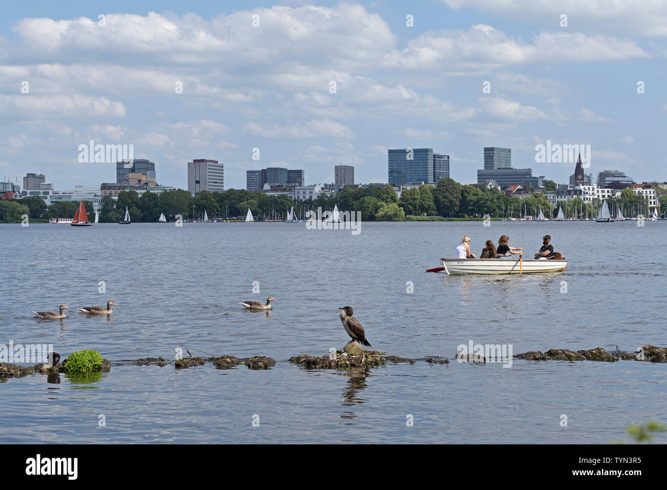 great cormorant (Phalacrocorax carbo), Outer Alster, Hamburg, Germany - Stock Image