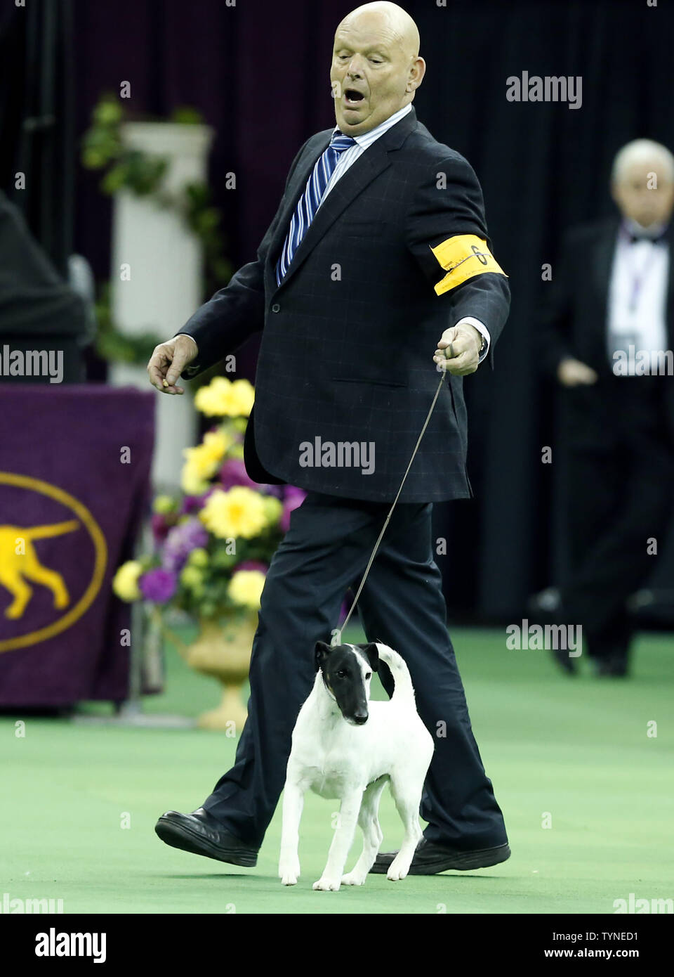 Eddie Boyes reacts when Smooth Fox Terrier Adam wins the Terrier Group at the 137th Annual Westminster Kennel Club Dog Show at Madison Square Garden in New York City on February 12, 2013.      UPI/John Angelillo Stock Photo
