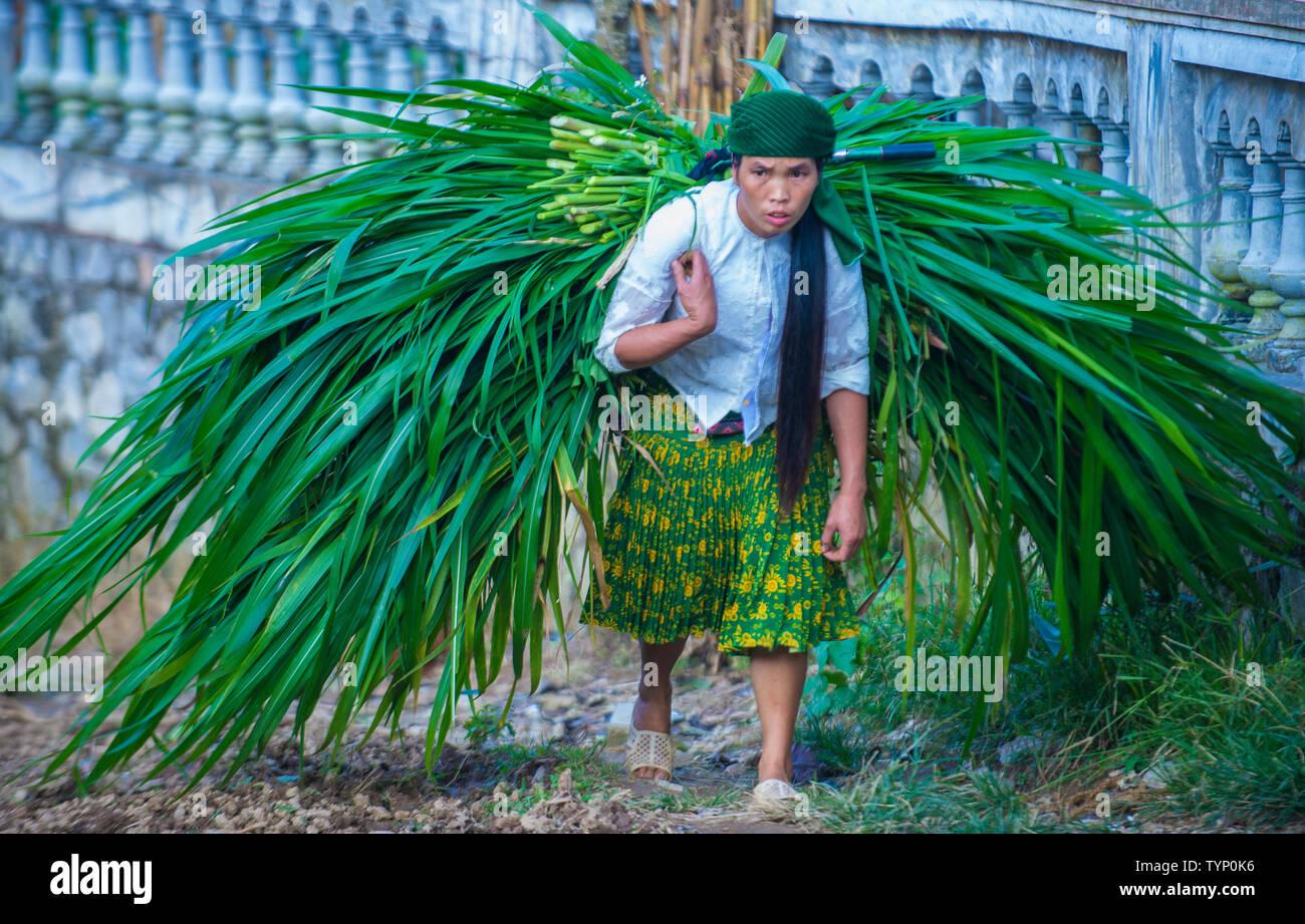 Vietnamese farmer in a countrside near Ha Giang Vietnam - Stock Image