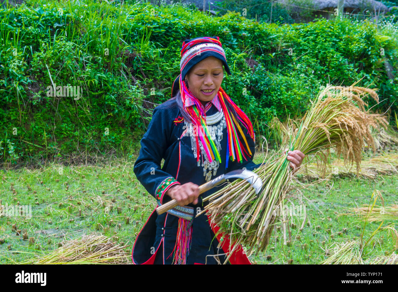 Woman from the Red Dao minority in a village near Ha Giang in Vietnam - Stock Image