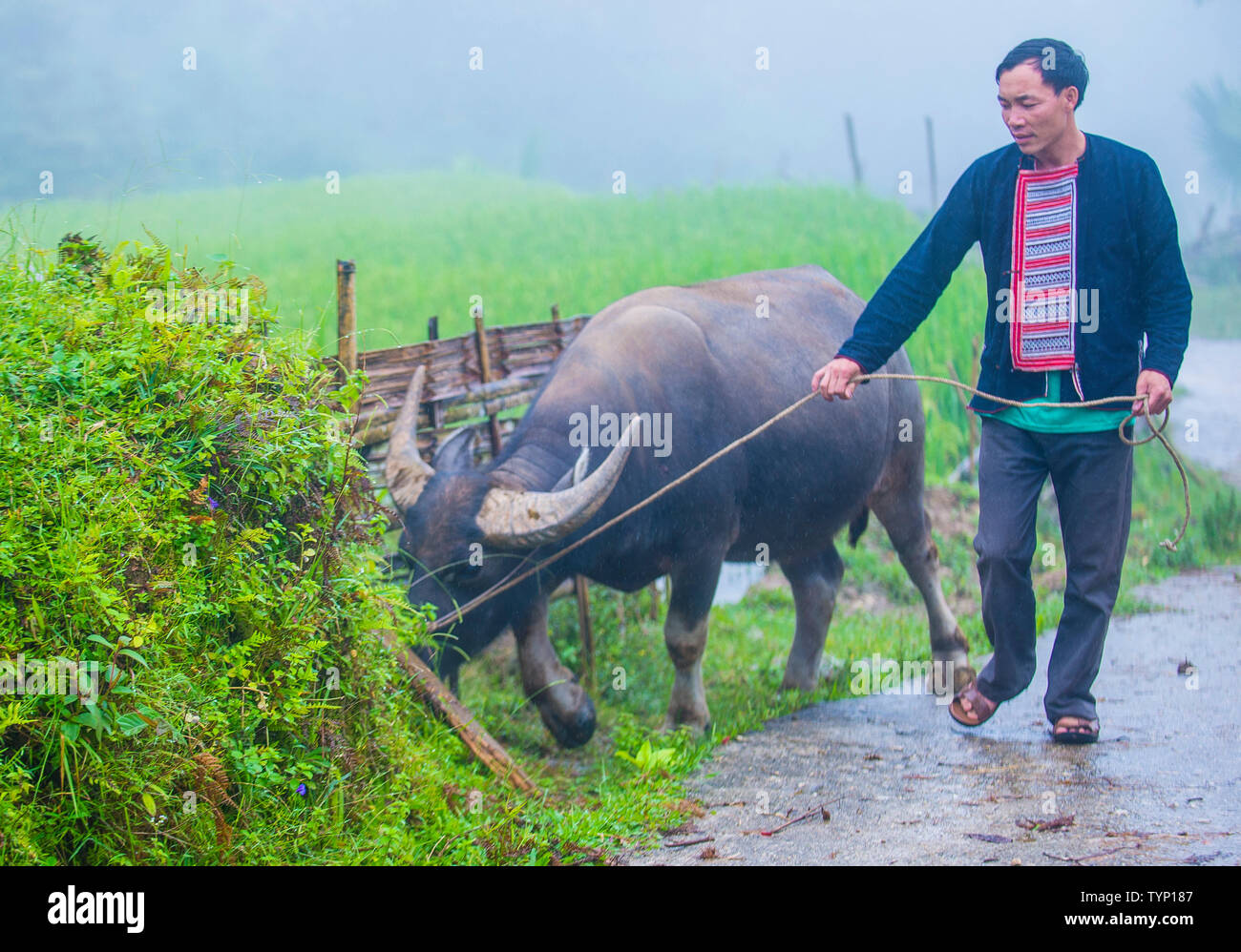 Man from the Red Dao minority in a village near Ha Giang in Vietnam - Stock Image
