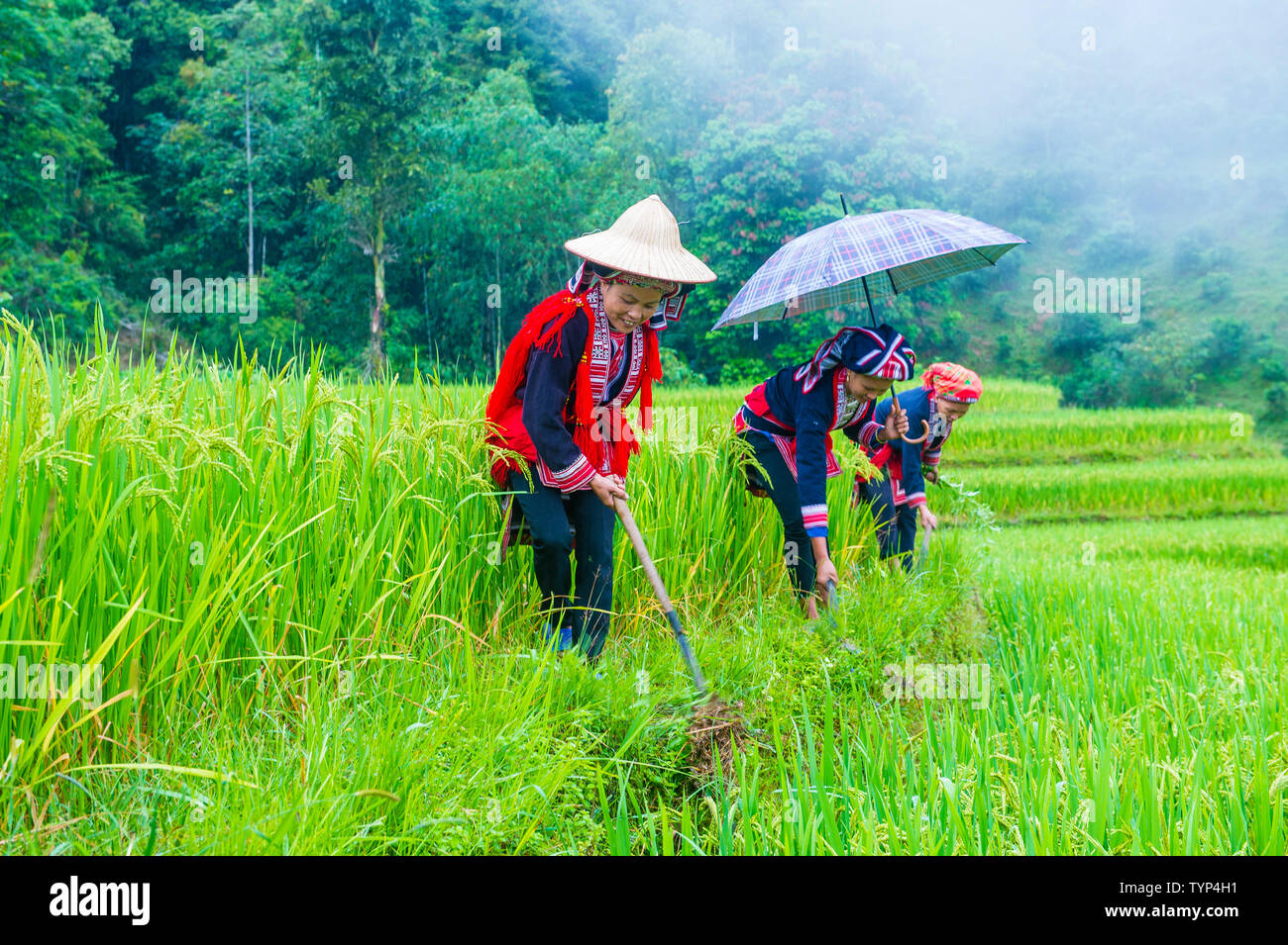 Women from the Red Dao minority in a village near Ha Giang in Vietnam - Stock Image