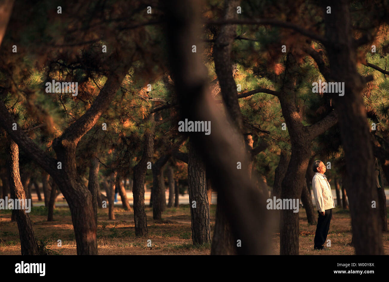 Qigong Exercise Stock Photos & Qigong Exercise Stock Images