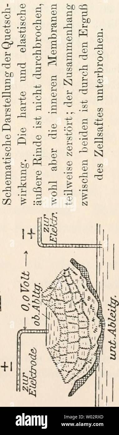 Archive image from page 156 of Die Entstehung elektrischer Ströme in. Die Entstehung elektrischer Ströme in lebenden Geweben und ihre künstliche Nachahmung durch synthetische organische Substanzen; experimentelle Untersuchungen  dieentstehungele00beut Year: 1920 Stock Photo