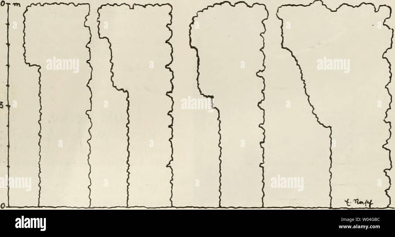 Archive image from page 261 of Die Gartenkunst (1899). Die Gartenkunst  diegartenkunst15deut Year: 1899  Abb. Heckenquerschnitle. mmwm Originalzeichnung von E. Rasch, Stuttgart. Terrain weit schöner und interessanter als dies mit freientwickelten Gehölzen im bebauten auszubilden, möglich ist. Auch im offenen Garten warten noch ungezählte interessante Aufgaben ihrer Lösung, bei welcher die Hecke nicht fehlen darf. Ich darf wohl annehmen, daà das, was die Anlage, Pflege, den Schnitt, die Bewässerung usw., also das Technische betrifft, bei den Lesern der Gartenkunst bekannt ist, denn es geh Stock Photo