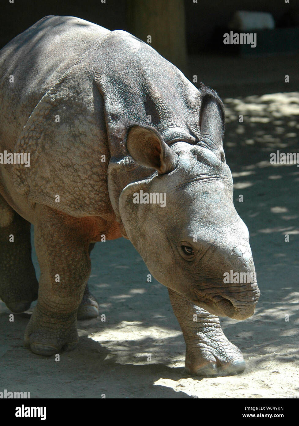 Old Rhino High Resolution Stock Photography And Images Alamy