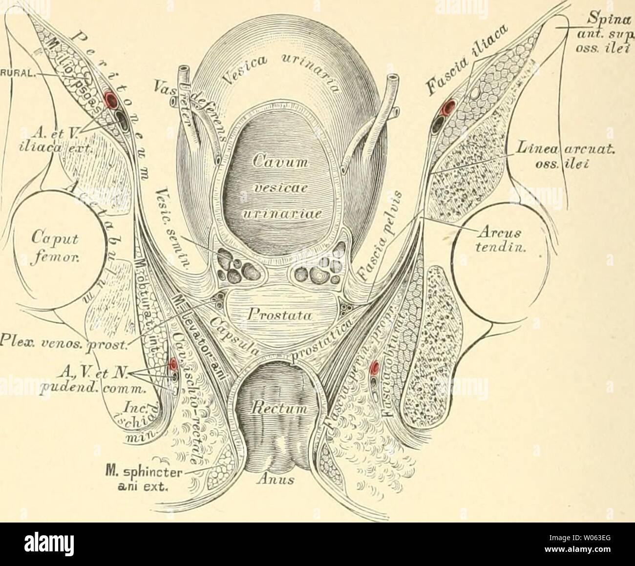 Sich hodensack häutet Hodenschmerzen: Symptome