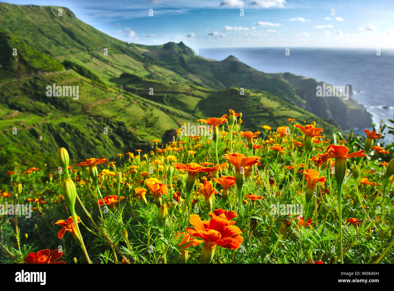 Flowers on Flores Island Azores Portugal Stock Photo