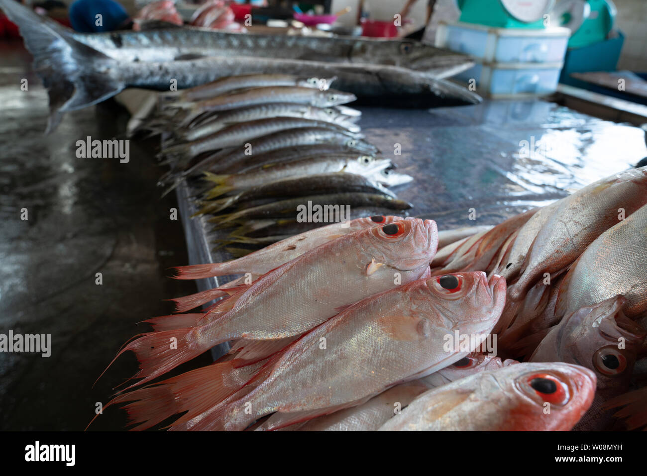 fresh seafood in city's wet or fish market near wharf. - Stock Image