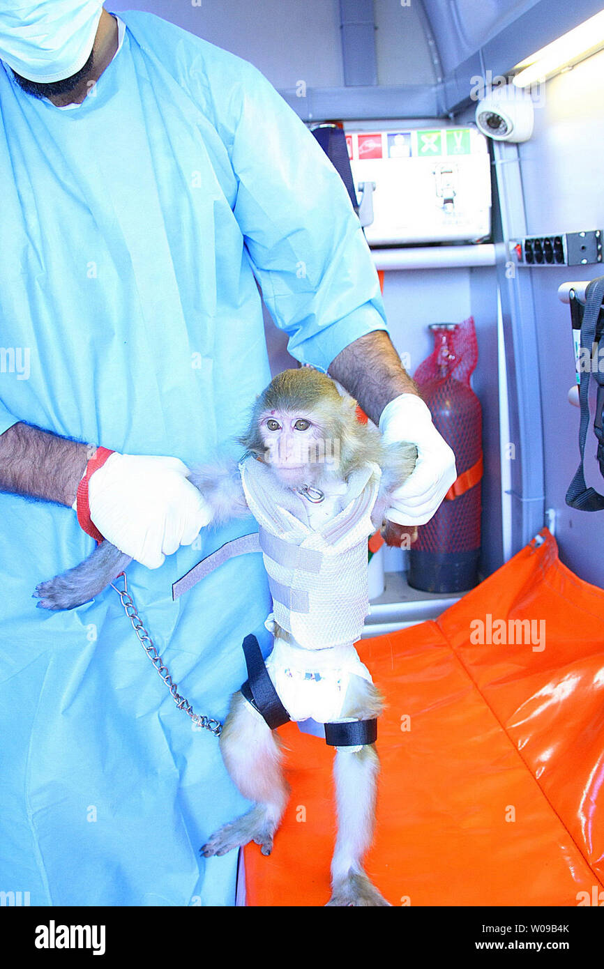 An Iranian scientist holds a live monkey at an unknown location in Iran on January 28, 2013.  Iranian state media reported that it lauched the monkey in a suborbital flight and returned it safely to Earth. The missile launch touched concerns that Iran could use this accomplishment to launch nuclear missiles, but there has been no immediately confirmation of Iran's claim.  UPI - Stock Image