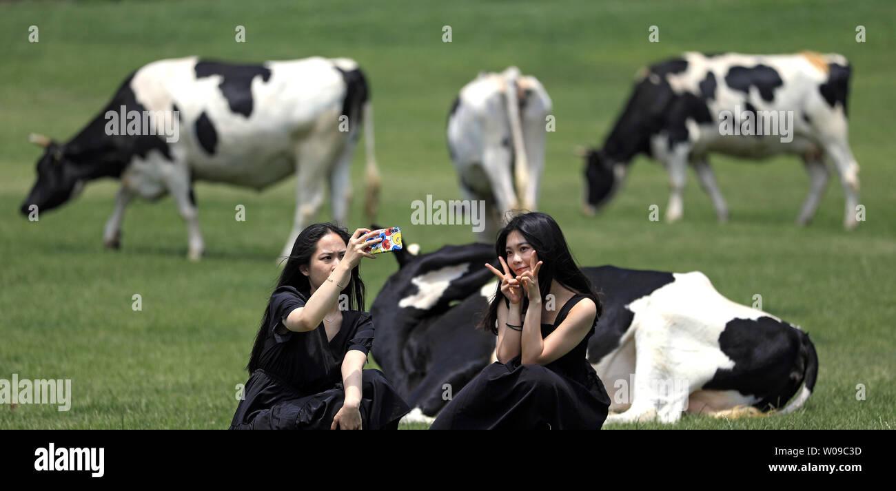 (190627) -- DALIAN, June 27, 2019 (Xinhua) -- Tourists pose for photos at Sanhuan pastureland in Dalian, northeast China's Liaoning Province, June 26, 2019. (Xinhua/Yao Jianfeng) - Stock Image