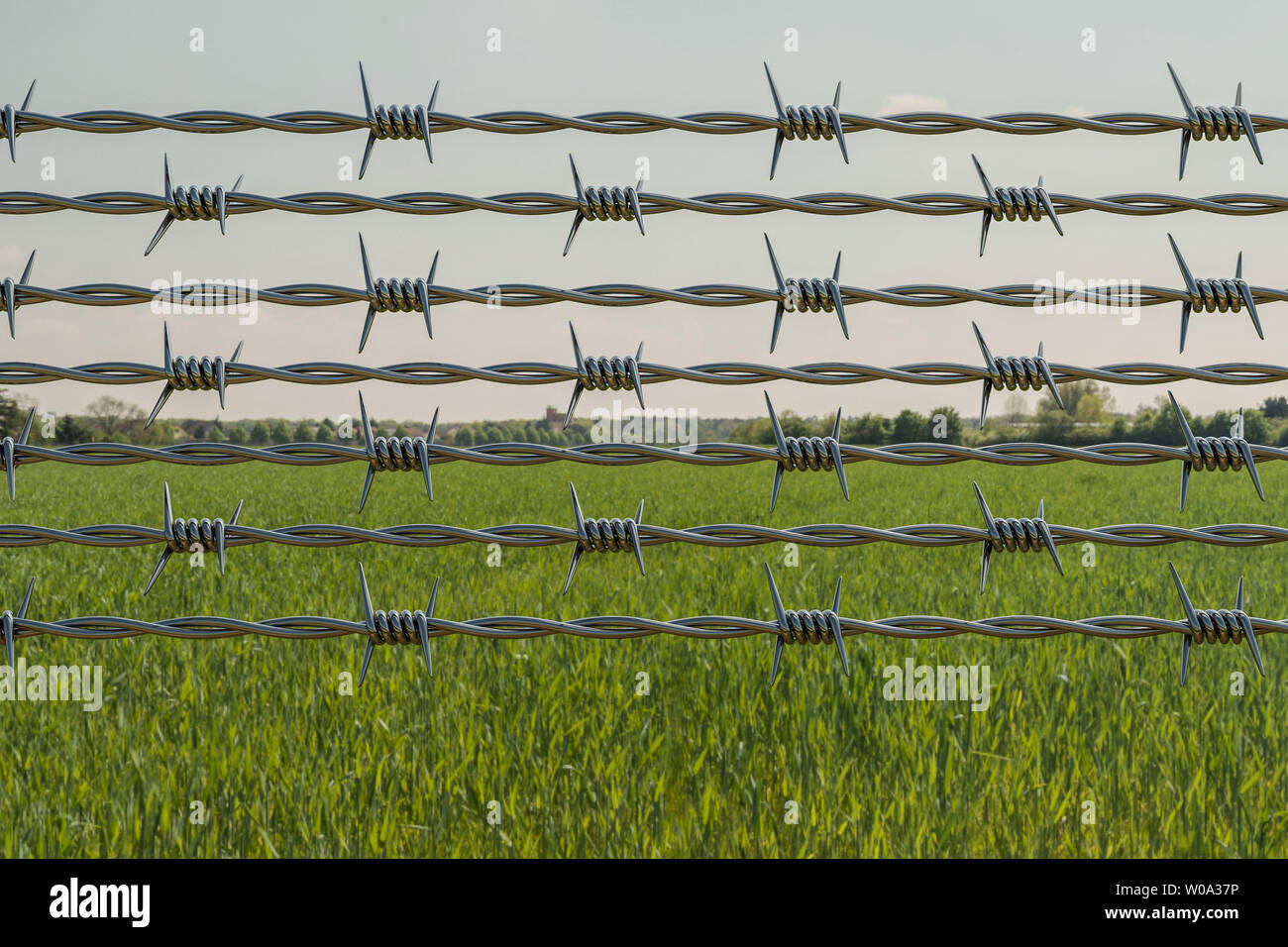 Barbed wire fence of a restricted area under blue sky 3d illustration - Stock Image