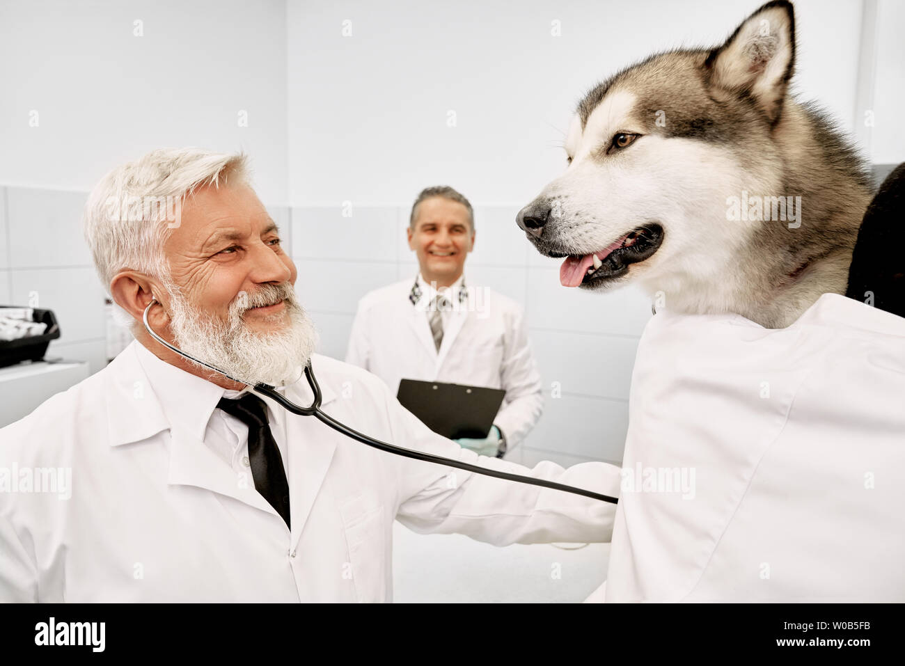 Vet specialist diagnosing and examining big beautiful dog, using stethoscope. Doctor and assistant looking at pet, smiling, wearing in medical white uniform. Doctor holding folder, in clinic. - Stock Image