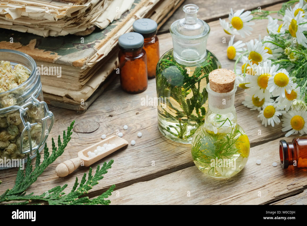 Infusion bottles, Chamomile flowers and Thuja occidentalis