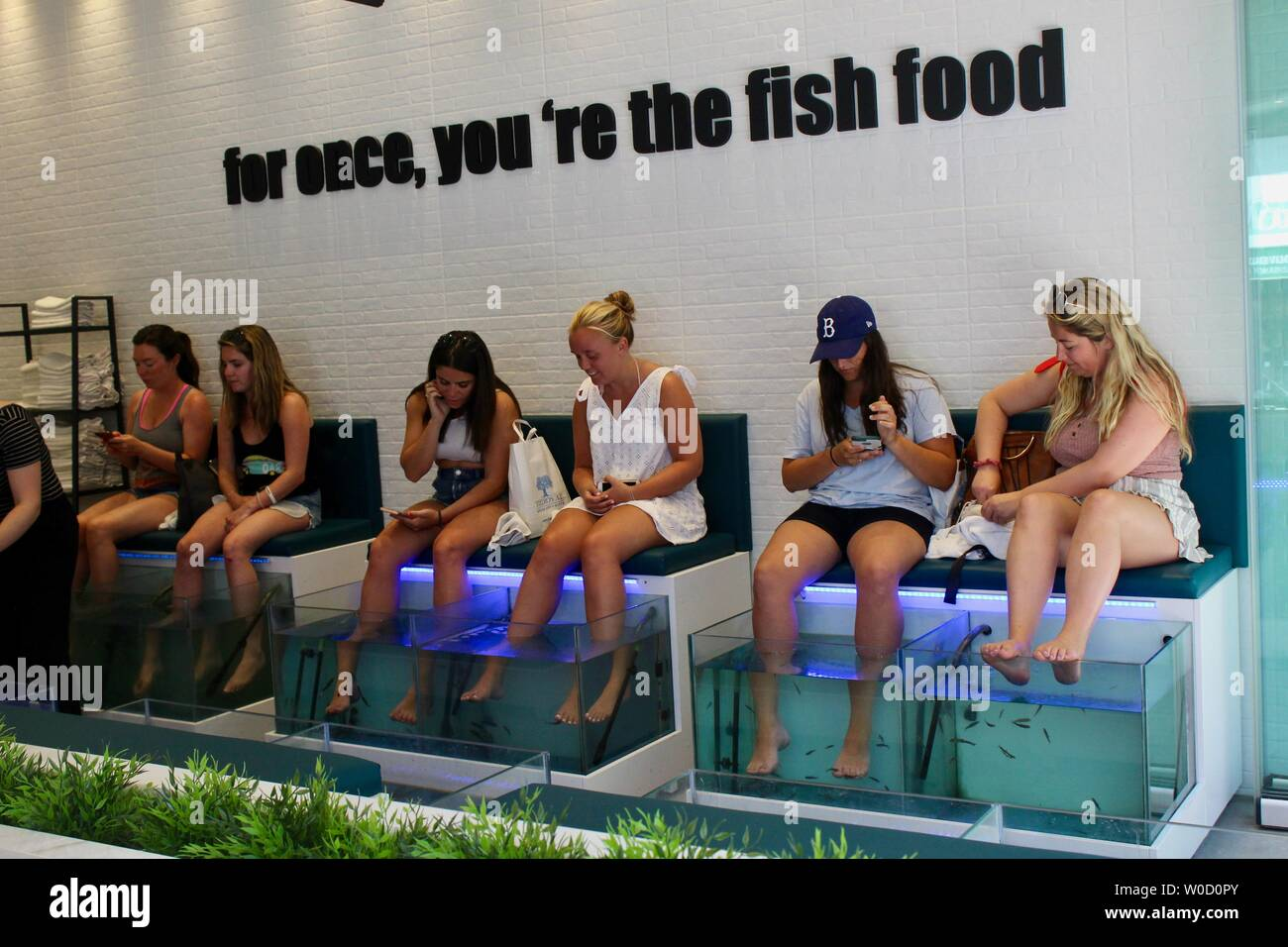 women having fish treatment to feet at doctor fish spa athens greece - Stock Image