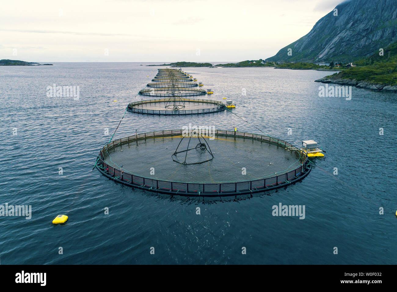 Norway, Lofoten Islands. Mølnarodden Salmon fishery - Stock Image
