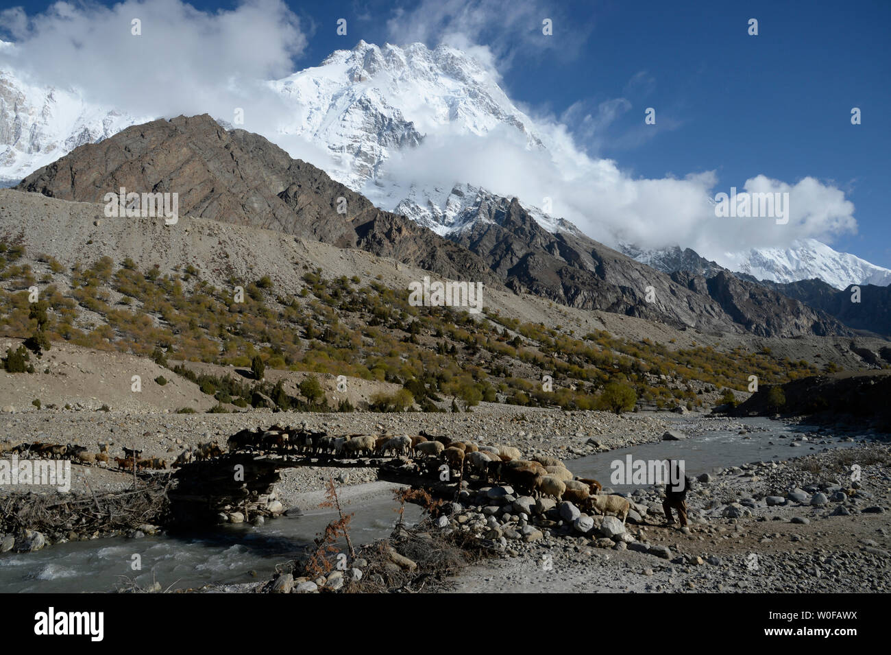 Pakistan, Gilgit Baltistan area, a sheperd is crossing with his sheep the Shaigiri river at 3500m high at the bottom of the Nanga Parbat mountain (8126m). - Stock Image