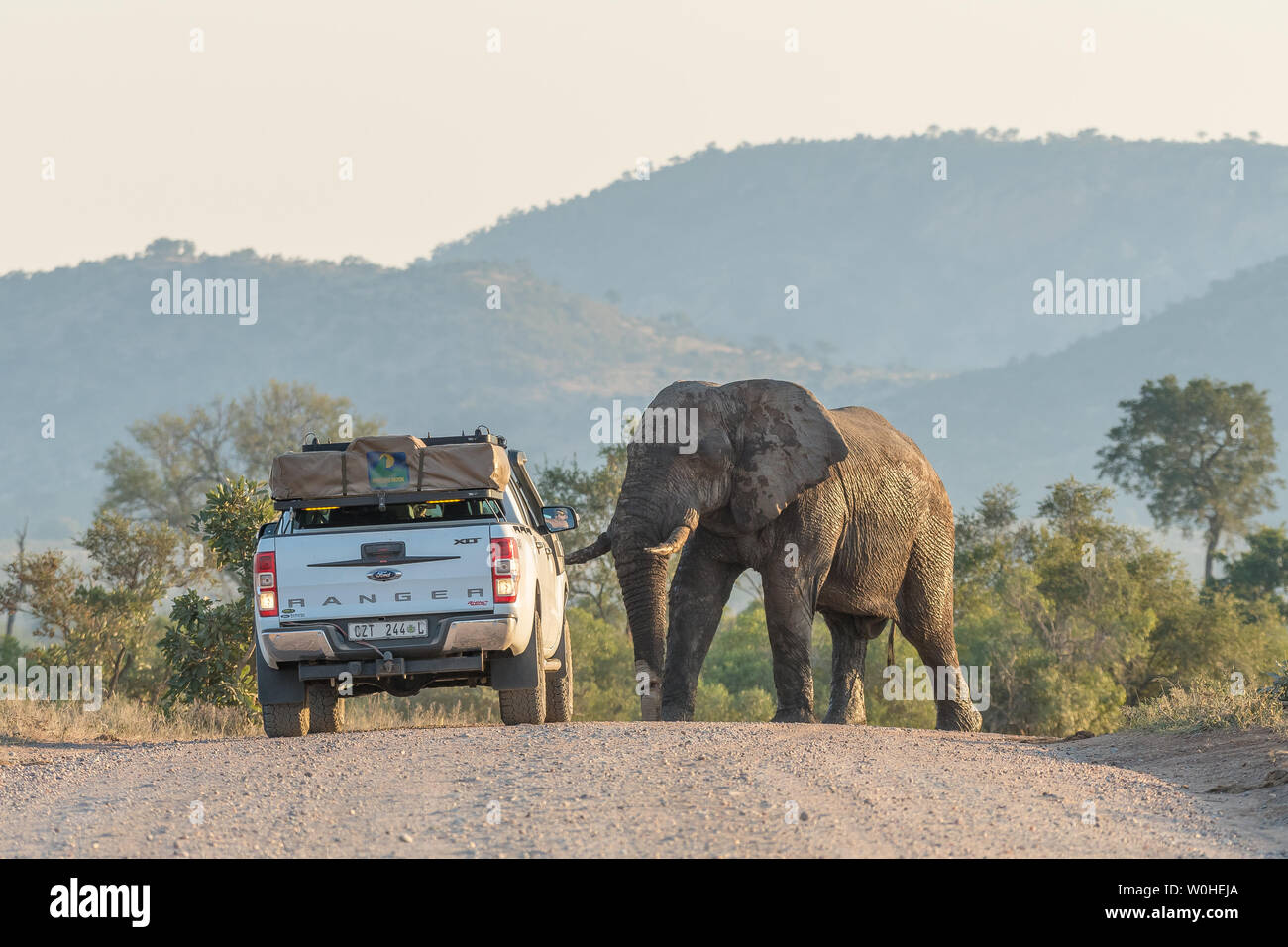 KRUGER NATIONAL PARK, SOUTH AFRICA - MAY 3, 2019: A vehicle