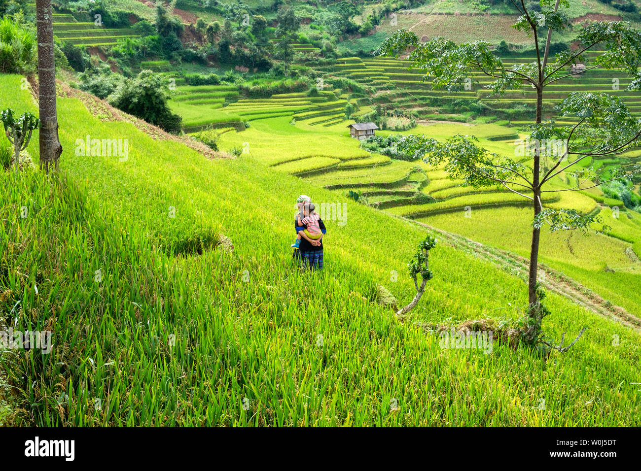 Mu Cang Chai, Vietnam - Sep 07 2017 : Grandmother carrying grandson walking in green rice field terraced on tribe valley - Stock Image