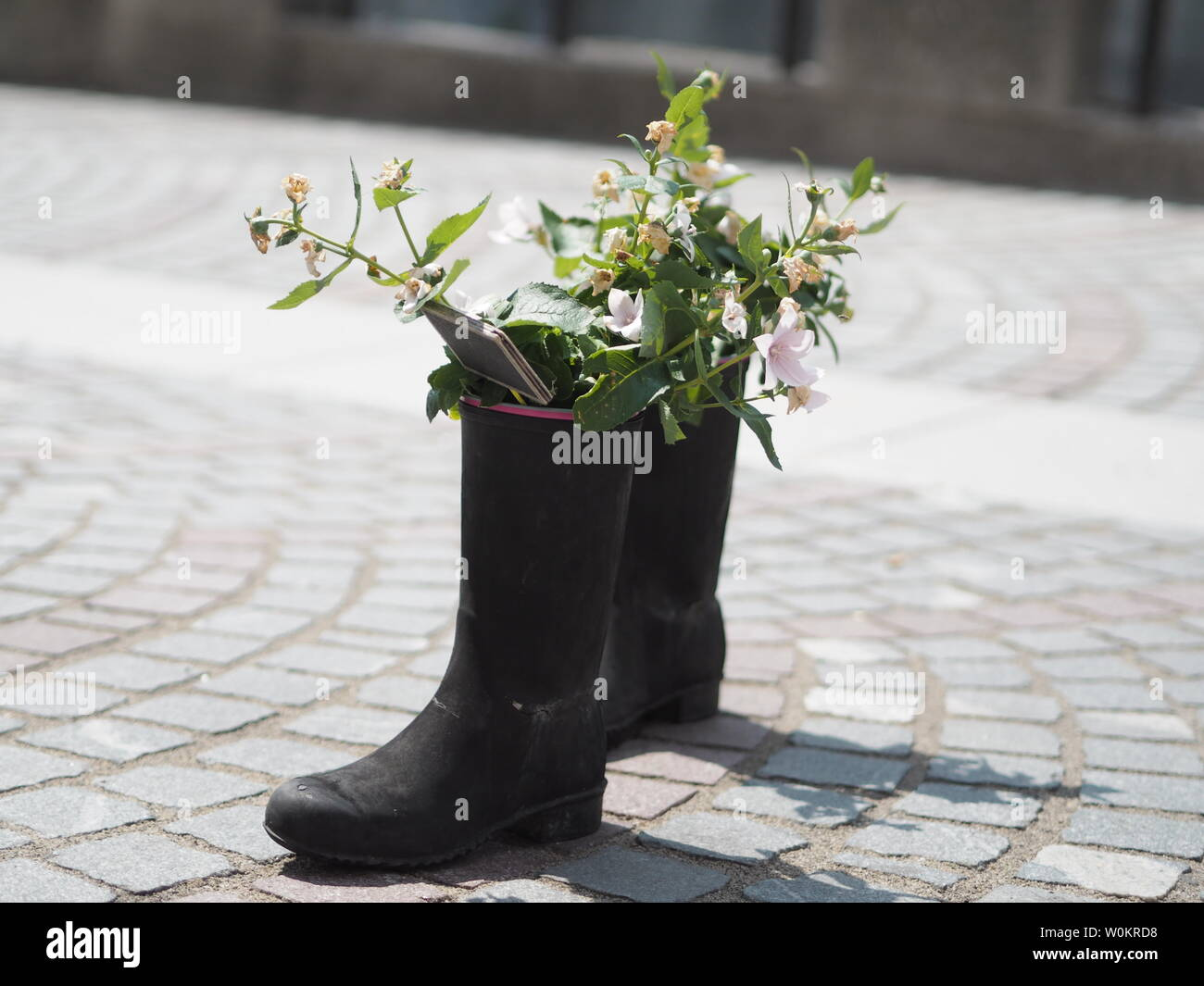 Plants growing from a welly in Ljubljana. Stock Photo