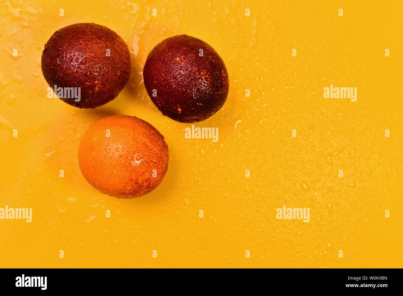 Three red oranges on a yellow sunny background on the left. On fruit and water drops background. - Stock Image