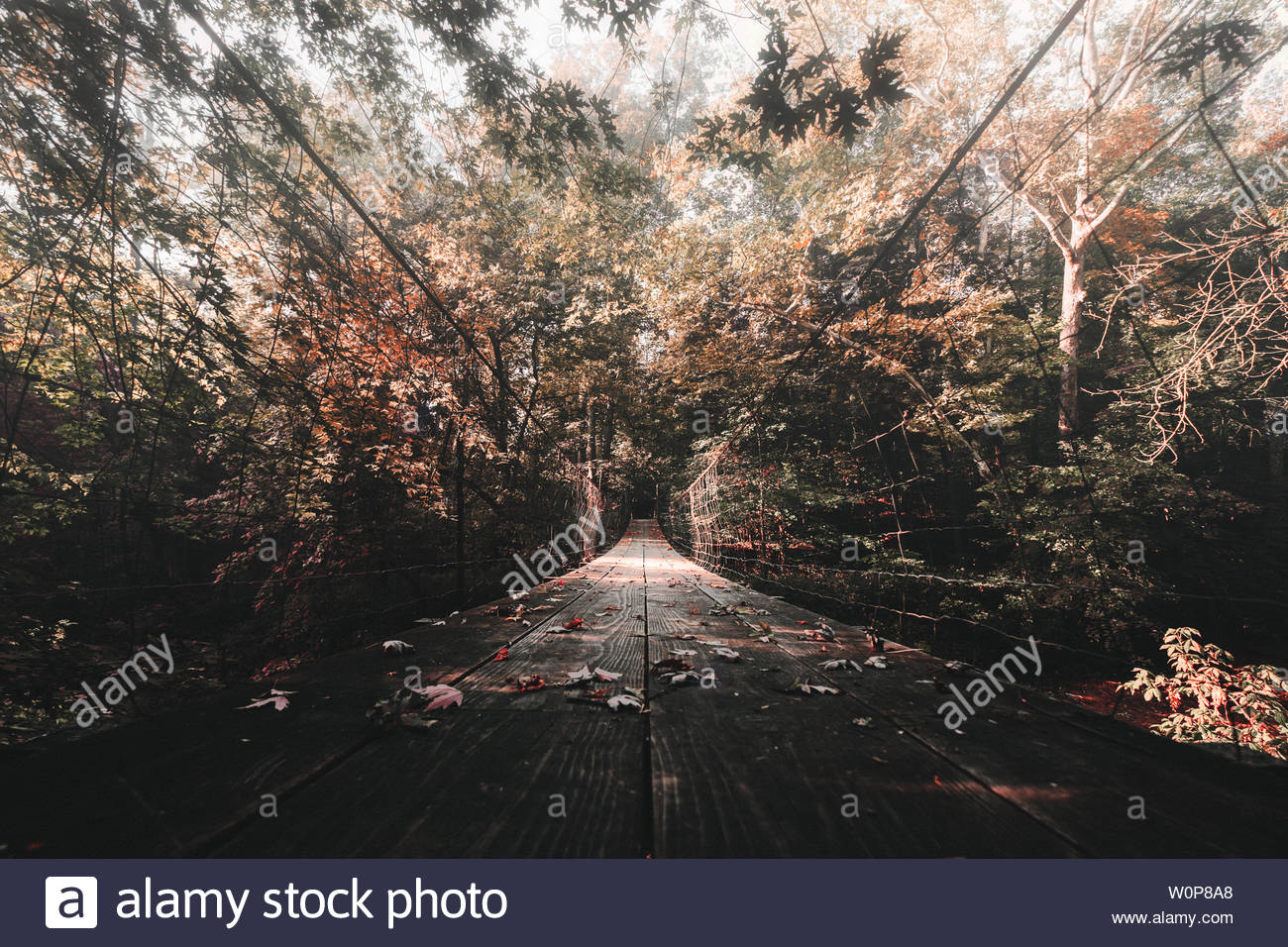 road cover by leaves - Stock Image