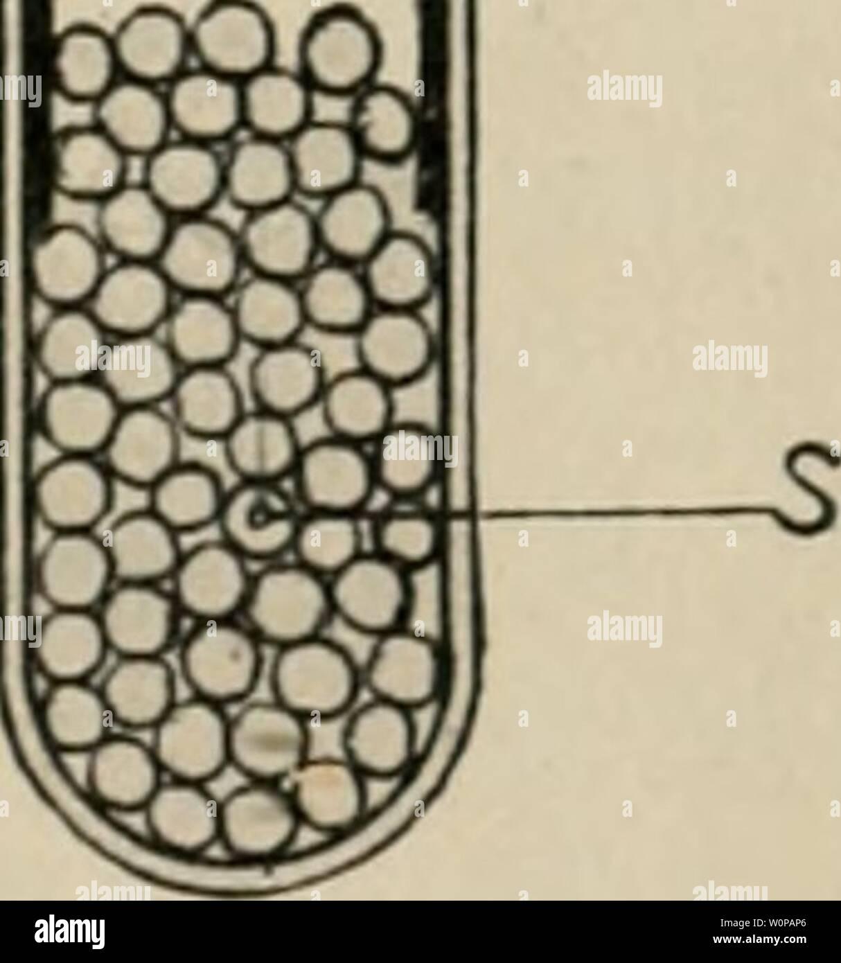 Archive image from page 32 of Der farbensinn und Formensinn der. Der farbensinn und Formensinn der Biene derfarbensinnund00fris Year: 1914  C -'    Fig. B. entfaltete (zufällig in der Nähe des Versuchstisches) die Taf. 1, auf der die 4 blauen Dressurpapiere in blauer Farbe reproduziert sind; das Blau war auf der Probetafel dunkler und intensiver als auf der vorliegenden Taf. 1. Nach wenigen Sekunden hatten sich einige dressierte Bienen eingestellt, die gegen die kleinen blauen Felder anflogen und sich bald hier, bald dort auf einem der 4 Felder niederließen, wobei sie es mit ihrem Körper fast - Stock Image