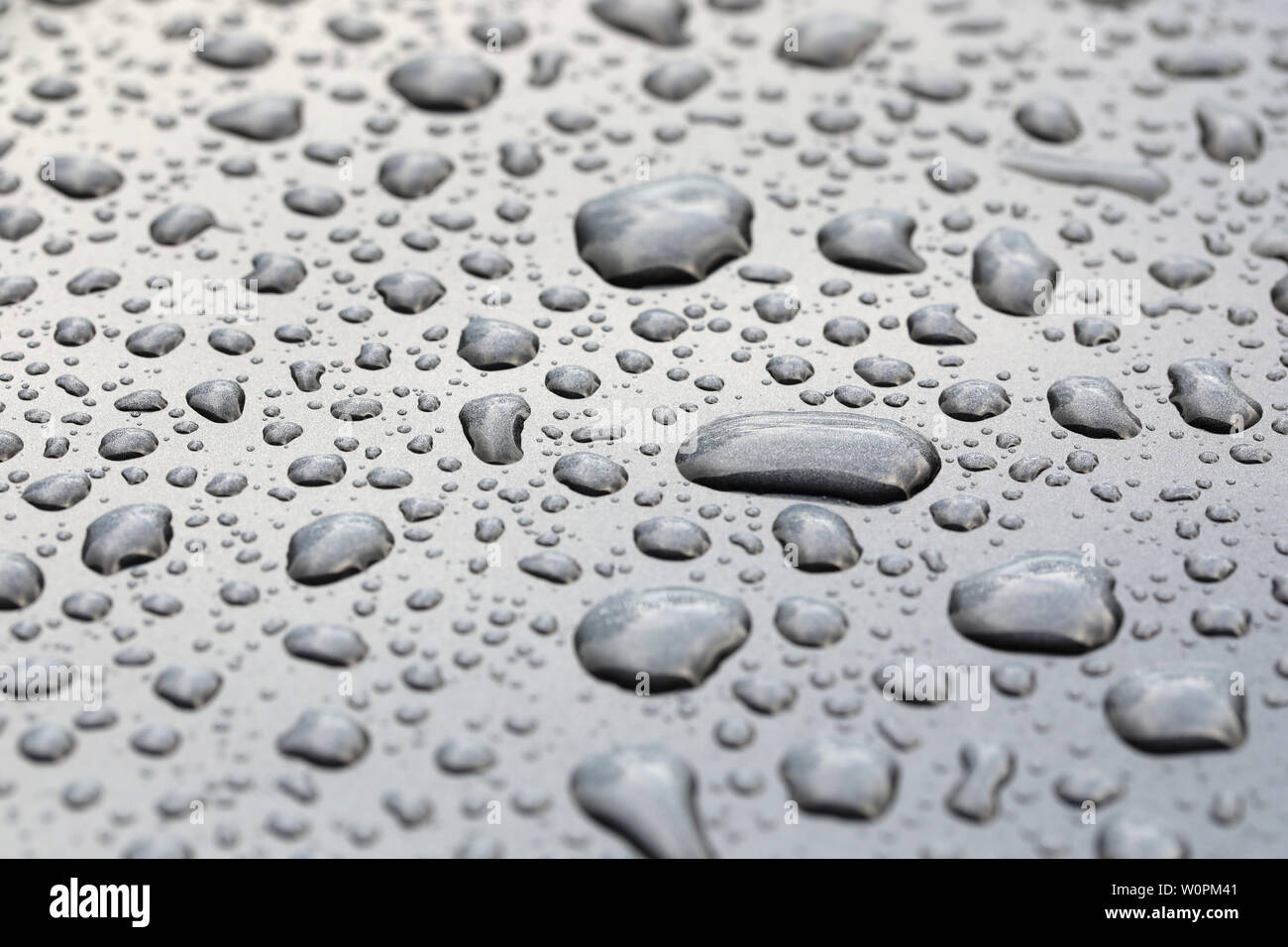 pattern of rain water droplets beading on a polished grey metal surface. Beads of rain sitting on a clean grey background - Stock Image