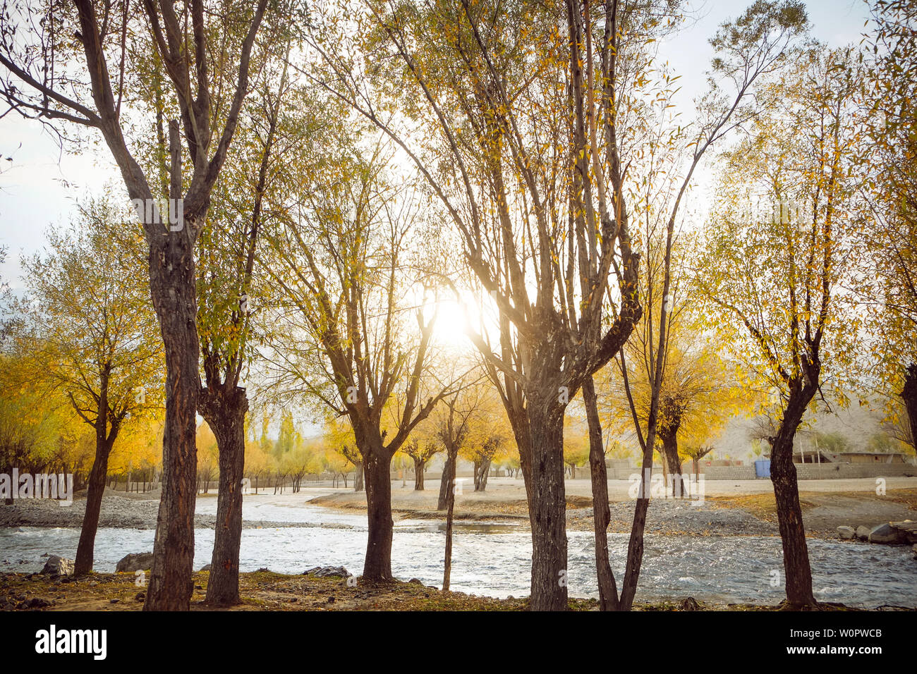 Sunrise lit colorful forest in autumn season. River flowing through yellow leaves trees. Sunshine in Skardu. Gilgit Baltistan, Pakistan. - Stock Image